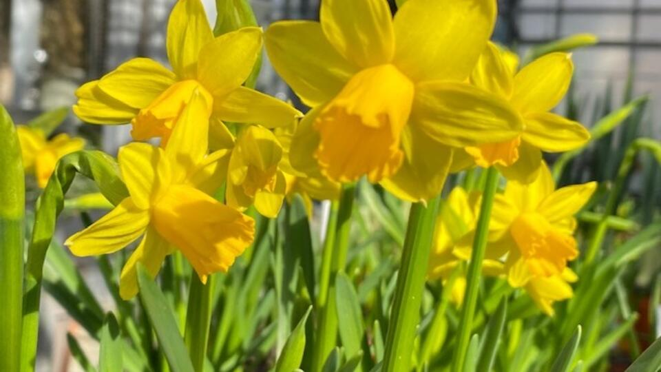Frühlingserwachen12
