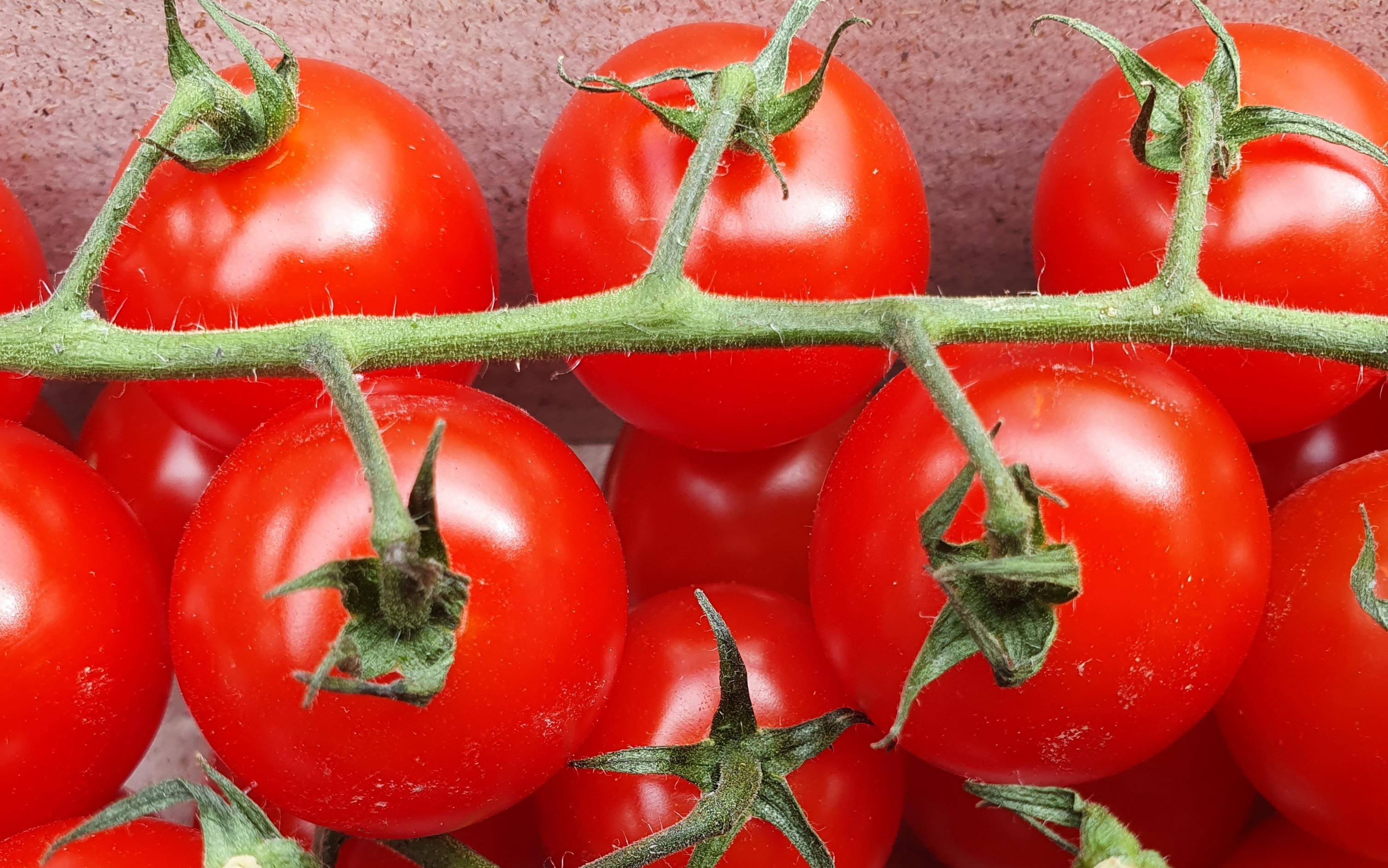 tomaten.jpg#asset:4587