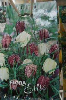 Grosse Vielfalt diverser Zwiebelpflanzen