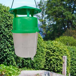 buchsbaumzuenslerfalle_biogarten_biologische_loesungen_buchsbaumzuensler-falle_1